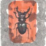 Hirschkäfer, Tinte auf Papier, 21,5cm x 29,5cm