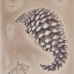Manida Strobilae: Zapfenschuppentier, 50cm x 65cm, Mischtechnik auf Halbkarton (VERKAUFT)